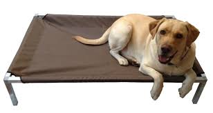 Xlarge Dog Beds by Beds For Dogs South Africa Perplexcitysentinel Com