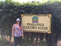 Pineapple Garden Maze Picture of Dole Plantation Wahiawa
