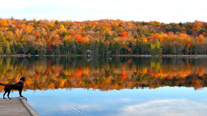 Pumpkin Festival Milford Nh by Hidden Nh Gem The Swinging Bridge Of Milford New England Events