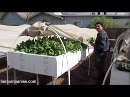 Backyard aquaponics as selfsustained farm in suburban LA YouTube