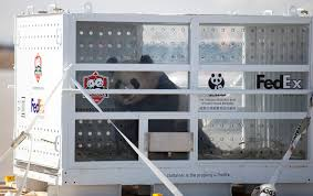100 Fedex Freight Trucking Boards The FedEx Panda Express China To Canada
