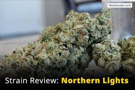 Strain Review Northern Lights Weed Reader