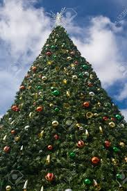 Griswold Christmas Tree by Outside Christmas Trees Christmas Lights Decoration