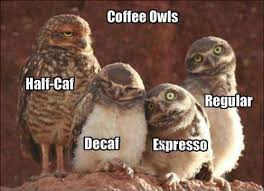 Hilariously Adorable Owl Memes 12