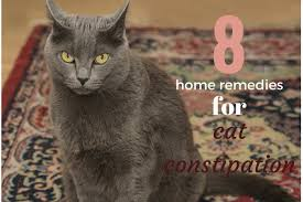 cisapride for cats home remedies for cat constipation