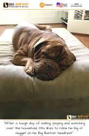 Unchewable Dog Bed by Best 25 Tough Dog Beds Ideas On Pinterest Dog Beds Kuranda Dog
