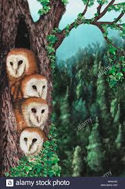 Group Of 4 Four Barn Owls In Tree Artistic Illustration Pastels ... Weekend Getaway Guide Wooster And Wayne County Ohio Girl Pottery Barns Holiday Dcor Driven By Decor 101_0639jpg The Pine Tree Barn Flushing Mi Image Mag Barred Owl On Top Of A Pine Tree Wallpaper Animal Wallpapers Ol Dairy Christmas Farm Trees Old In Sunnyside Georgia 20 Small Towns You Should Be Spending Time This Fall Jones Family Best Images On Find The Perfect At Evans Whispering Pines Faux Lit Basket Au Willamsburg Festival Shreve Been There