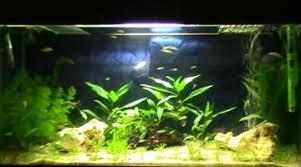 ph aquarium eau douce eau hors norme selon le calcul du co2 en fonction du ph et kh