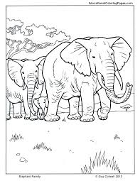 Animal Pictures Coloring Pages