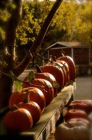 Eckerts Pumpkin Patch St Louis Mo by 356 Best Fall The Pumpkin Patch Images On Pinterest Halloween