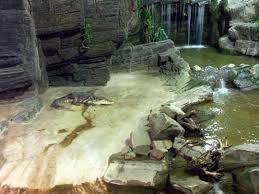 musee de la porte doree aquarium de la porte dorée photo fosse aux crocodiles