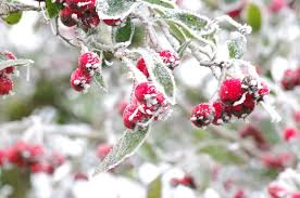 Cold Weather Plant Protection Tips For Protecting Plants In Winter