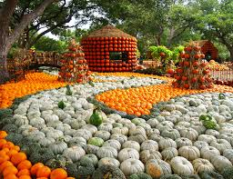 Pumpkin Patch Columbia Sc 2015 by This Fall Fall For Dallas Kellymitchell