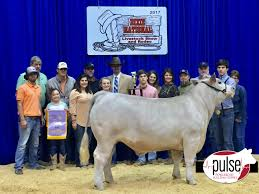 Dixie National Livestock Show | Junior Market Steers | The Pulse 1021cattle6ajpg Purple Reign Cattle Company Online Sale The Pulse February 2017 Texas Longhorn Trails Magazine By A Good Place To Be Cow At Fort Worth Stock Show Animals Are Commercial And Registered Ozarks Farm Neighbor Newspaper Cattlemen Opmistic About Resumed Beef Exports To China News Blog Lautner Farms Experience The Value Best Of Southwest Shootout Overall Market Burke Hidin In Sand Steer November 2015 Graham Livestock Auction Sanctioned Shows Ijbba Iowa Junior Beef Breeds Association