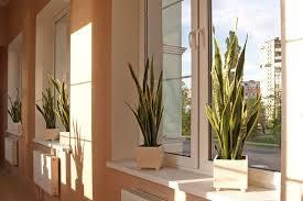 26 absolut pflegeleichte zimmerpflanzen für anfänger