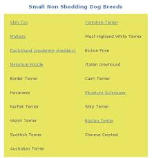 Non Shedding Dog Breeds Small do all short haired dogs shed
