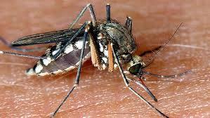 das schützt vor mückenstichen ndr de ratgeber verbraucher