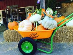Roloffs Pumpkin Patch In Hillsboro Or by 9 Best Pumpkin Patches In And Around Portland 2016