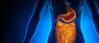 Leaky Gut: You've Heard It, But What Is It? Vitalreds Hashtag On Twitter 5 Situations In Which You Shouldnt Take Garcinia Cambogia Pills Coupon Code 50 Off Thunderbird Bar Coupons Promo Discount Codes Wethriftcom Vital Choice Www My T Mobile Hungry Root Unboxing Special Lectinshield Instagram Posts Gramhanet Amazoncom Gundry Md Lectin Shield 120 Capsules Health Personal Care Seamus 20 Off With Shipinjanuary Deal Or No Golfwrx Dr Gundry 2019 Proplants Free Shipping Vista Print Time