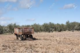 Old Farm Trailer On A Fallow Field At The Background An Olive Grove Photo Taken In