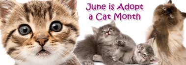 adopt a cat adopt a cat month animal clinic