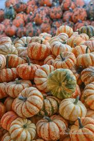Pumpkin Patch Columbus Georgia by Autumn Tongue Twister Pick A Pretty Pumpkin From This Pile On