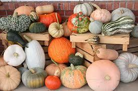 Varieties Of Pumpkins by Pumpkins