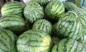 Types Of Pumpkins Grown In Uganda by Watermelon Farming Tips Techniques And Varieties In Kenya