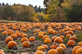 Best Pumpkin Farms In Maryland by Pumpkins Galore On The Eastern Shore Shorebread