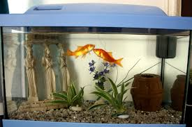 photos d aquarium page 129