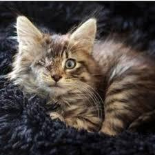 kitty cat kitty cat pals kittycatpalscty