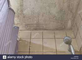 spot schimmel schimmel schimmel oder fungas auf die