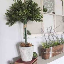 Decorating Beautiful Topiaries For Outdoor Modern Garden