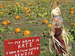 Pumpkin Patch Roseville Ca by Your Guide To Local Pumpkin Patches Dixon Ca Patch
