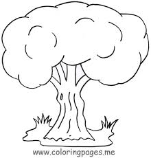 Coloring Pages For Trees And Birds Page Tree Leaves Of A Palm Large Size