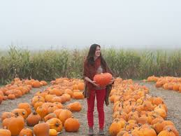 Half Moon Bay Glass Pumpkin Patch by 3 Days Cooking Holidays In Half Moon Bay Usa