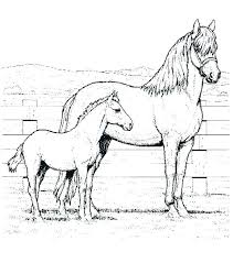 Glamorous Horse Pictures To Color Mother And Foal Coloring Pages Also