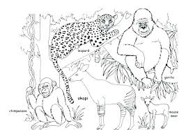 Wild Animals Coloring Pages Printable Cute Free