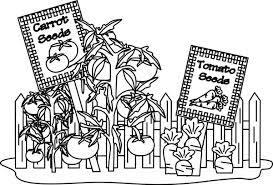 Carrot And Tomato Garden Coloring Pages