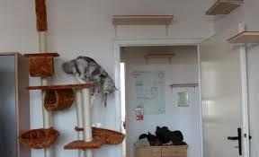 kleine wohnung katzengerecht gestalten katzen forum