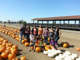 Pumpkin Patches In Bakersfield Ca by Patches Bakersfield Ca