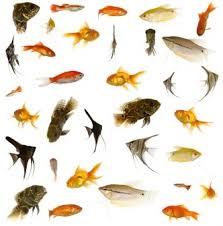 ph aquarium eau douce ph et dureté de l eau choix des poissons d aquarium