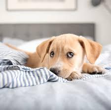 hund im bett macht gesund und glücklich brigitte de