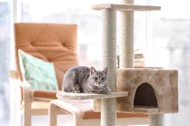 What You Need to Know About Purchasing the Best Cat Tree Housing