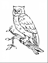 Incredible Printable Owl Coloring Page With Owls Pages And Pdf