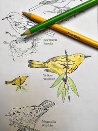 Yellow Warbler In The Peterson Birds Color Field