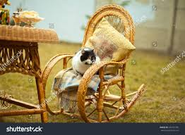 Cat On Rocking Chair Outdoors Wicker Stock Photo (Edit Now ...