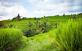 100 Word Of Mouth Bali 7 Reasons Why Is Paradise On Earth The Slow Road