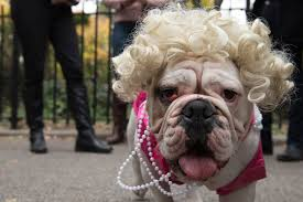 Clarendon Halloween Bar Crawl Livingsocial by 100 Tompkins Square Park Halloween Dog Parade 2015 The Best