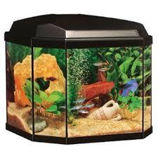 aquarium poisson prix aquarium poisson prix